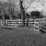 Carlton fencing & hedge laying