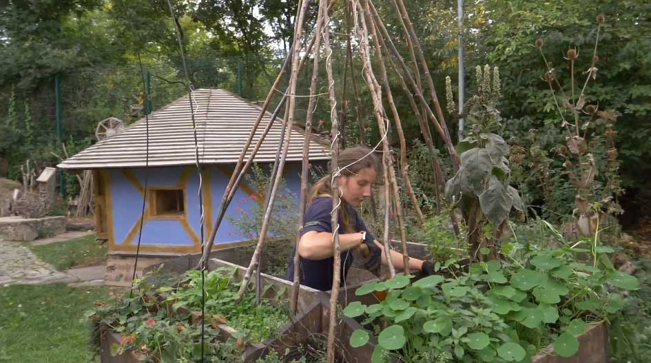 Stave Hill teepee planters
