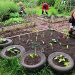 Skelton Grange's veggie patch