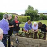 Building a Herb Garden