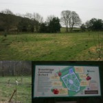All about community orchards