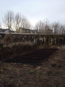 Campsie allotments (low res)
