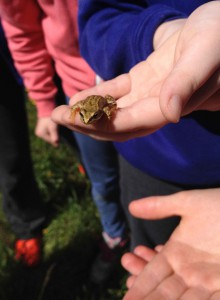 DPFHW frog