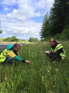 Fergus &Martina survey road verge mag meadows (web)