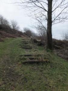 Taking a walk on the wild side in Faifley