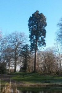 Standing tall at Castlemilk Woods