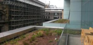 Roof gardens at the Glasgow School of Art showing the sky's the limit for urban green spaces