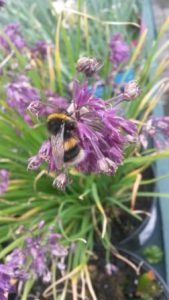 Buzzing about the hive of activity there's bee-n this month