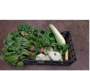 veg small