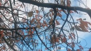Autumns in the air at Bellahouston......
