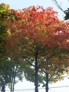 Changing colours at the Clydeside Community Park