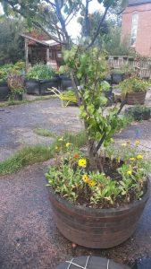 Definately a fruitful day at the Concrete Garden