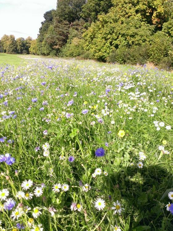 A meadow that I helped to install at Dalzell house in Motherwell,  Now looking amazing!