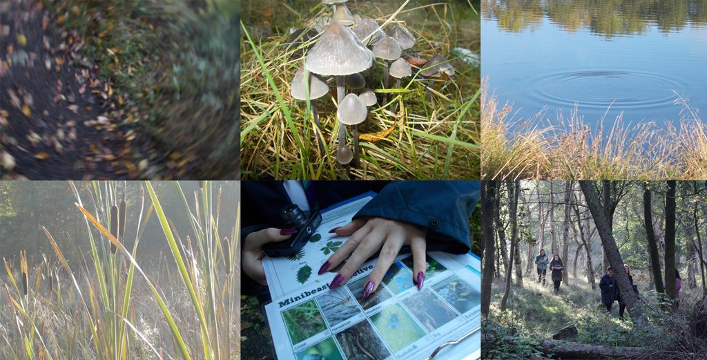 Some of the Photographs the Wild Ways Well Students captured