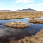 Saving the Peatlands