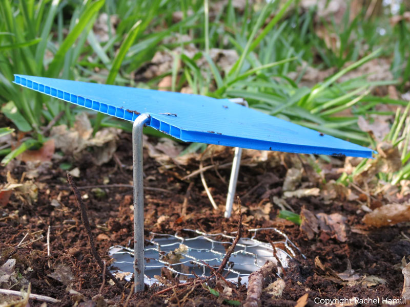 how to set up a pitfall trap