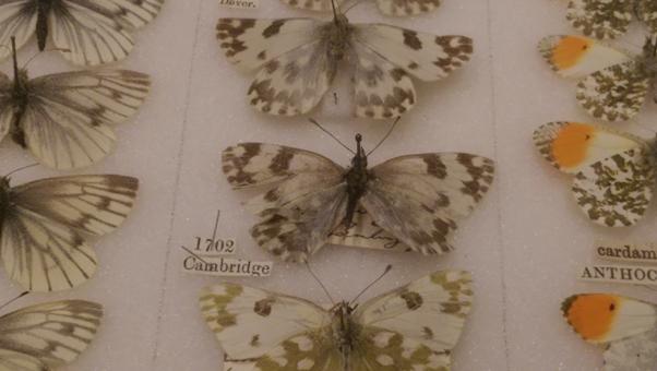 Oldest pinned specimen in the world