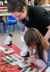 Discovering a whole new miniature world in our lichen lab!