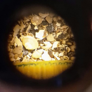Tiny shells and fragments under the microscope (see ruler for scale)