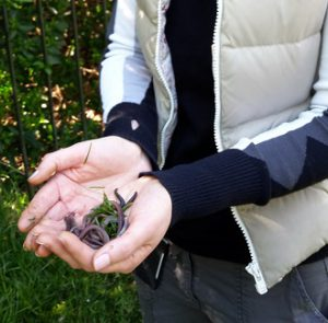 Handfuls of worms found in Kensington Gardens!