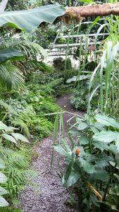 The tropical greenhouse at Treborth Botanical Gardens