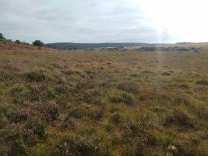 Dry heathland