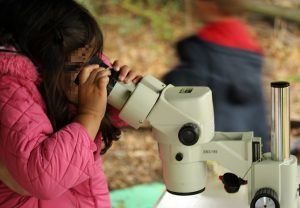 All ages had lots of fun using the microscope and learning about molluscs
