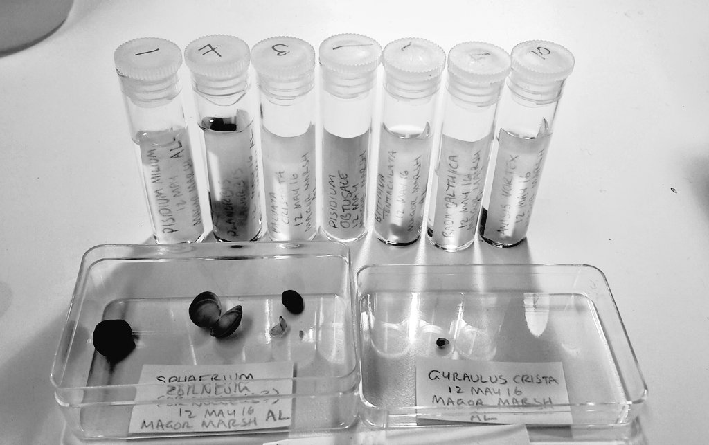 One of my freshwater samples sorted to species level with temporary labels