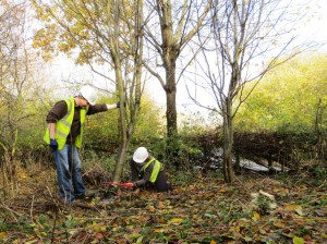 Volunteers Felling trees