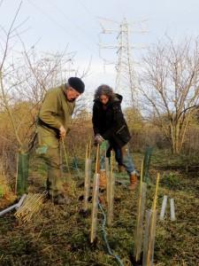 2016-01-21 Volunteering with Green Team at Skelton Grange - First TransPennine Express compressed (2)