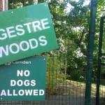 Reclaiming Ingestre Woods