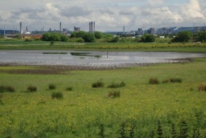 Grangemouth and Bothkennar Pools. Industry and nature sit side by side on the Forth. (Image by Toby Wilson, RSPB)