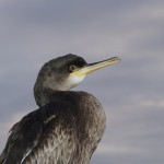 RSPB Birdcount