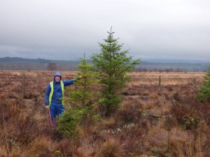 TCV Volunteer Kevin with a Christmas Tree