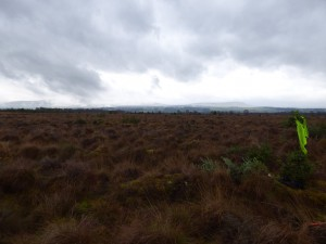 The view across the bog