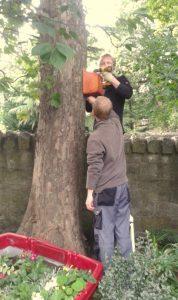 Erecting bird boxes at Starbank Park.