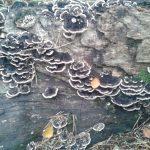 Fungi hunting at Muiravonside Country Park