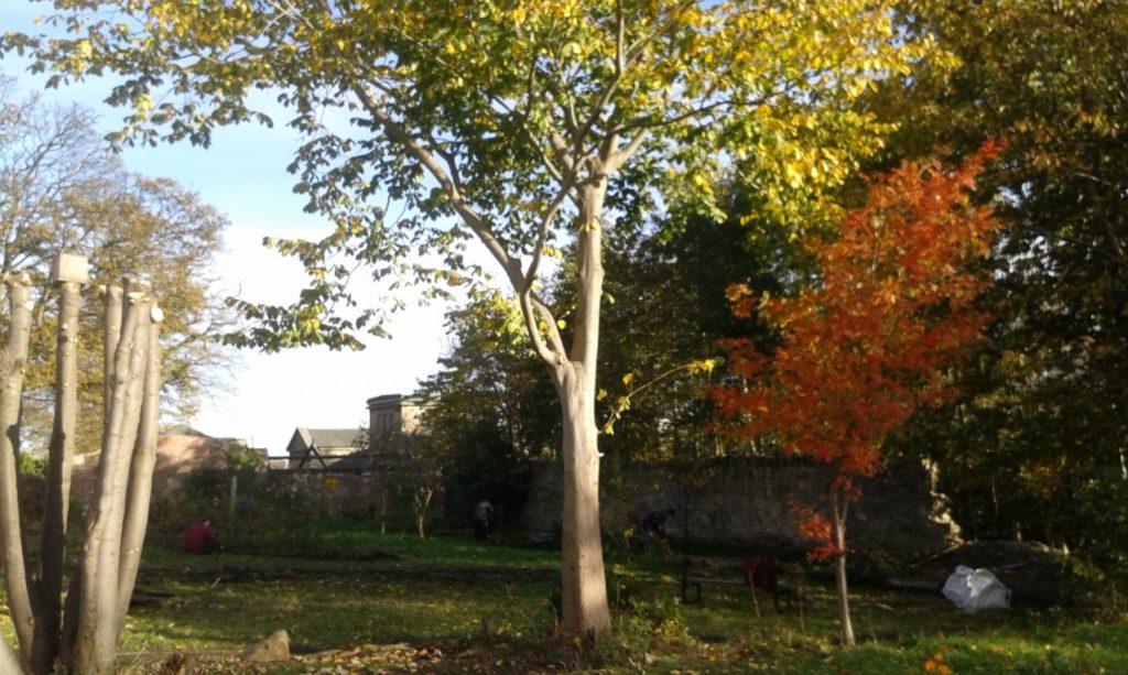 Beautiful autumnal scenes at Gracemount Walled Garden