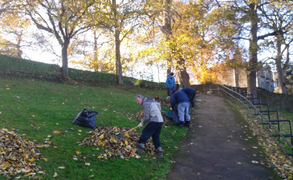 Leaves, leaves everywhere!