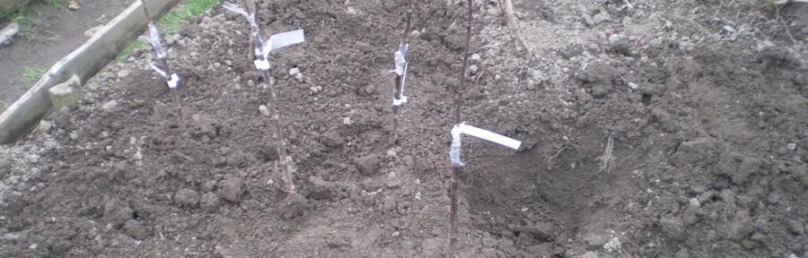 Apple Grafting, Tree Life Centre, Bristol, UK