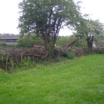 Traditional Hedge Laying, Tree Life Centre, Bristol