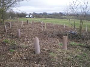 Tree Planting, Tree Life Centre, Bristol, Trees