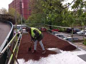 One stage of laying the eco-roof