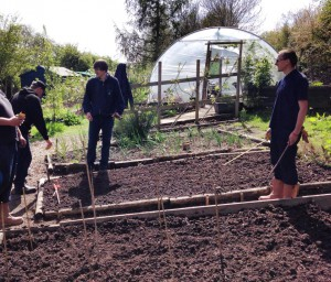 The veg seeds being sown