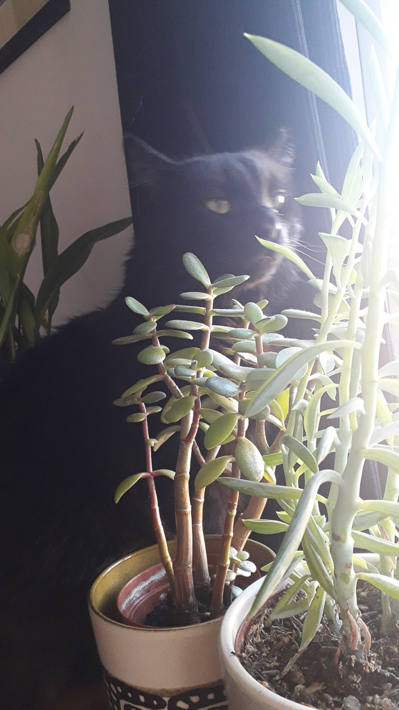 Houseplants and a cat
