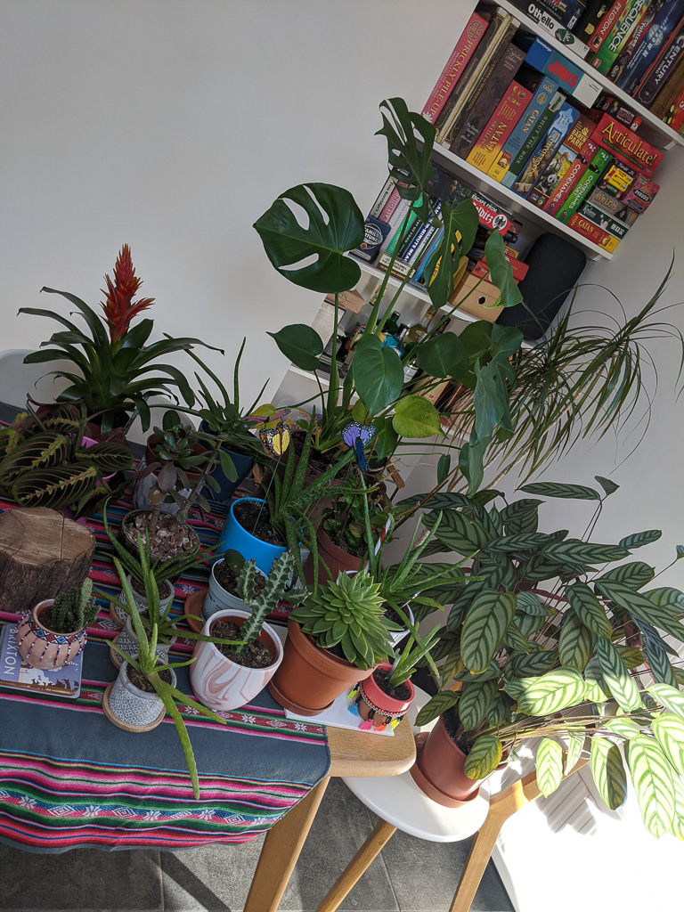 A tanle full of houseplants