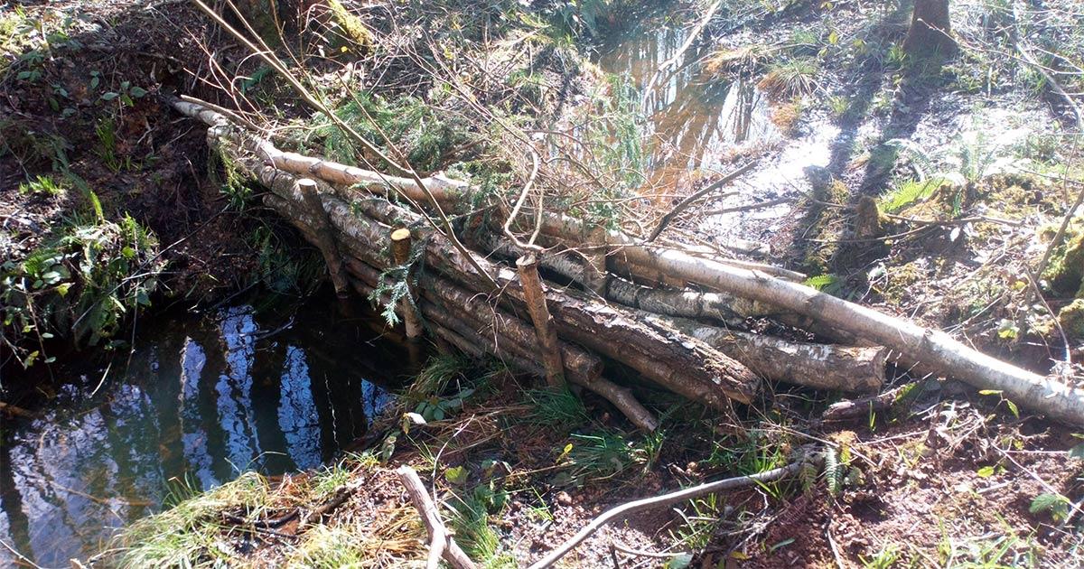 A dam across a small woodland stream