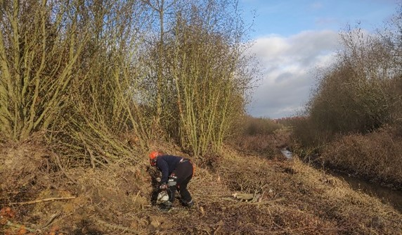 Person dredging woodland