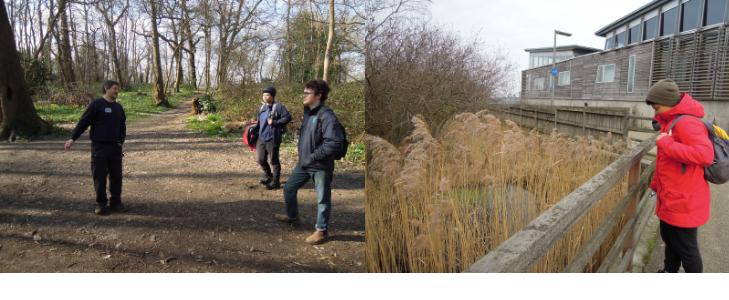Learning at Lesnes Abbey Wood and during a Lichen workshop at  TCV Greenwich Peninsula Ecology Park
