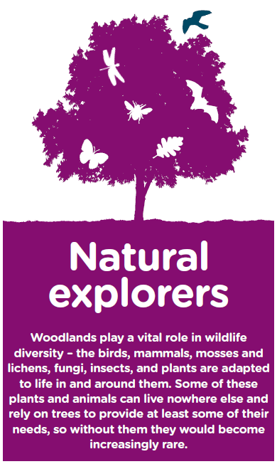 Vital role of woodland